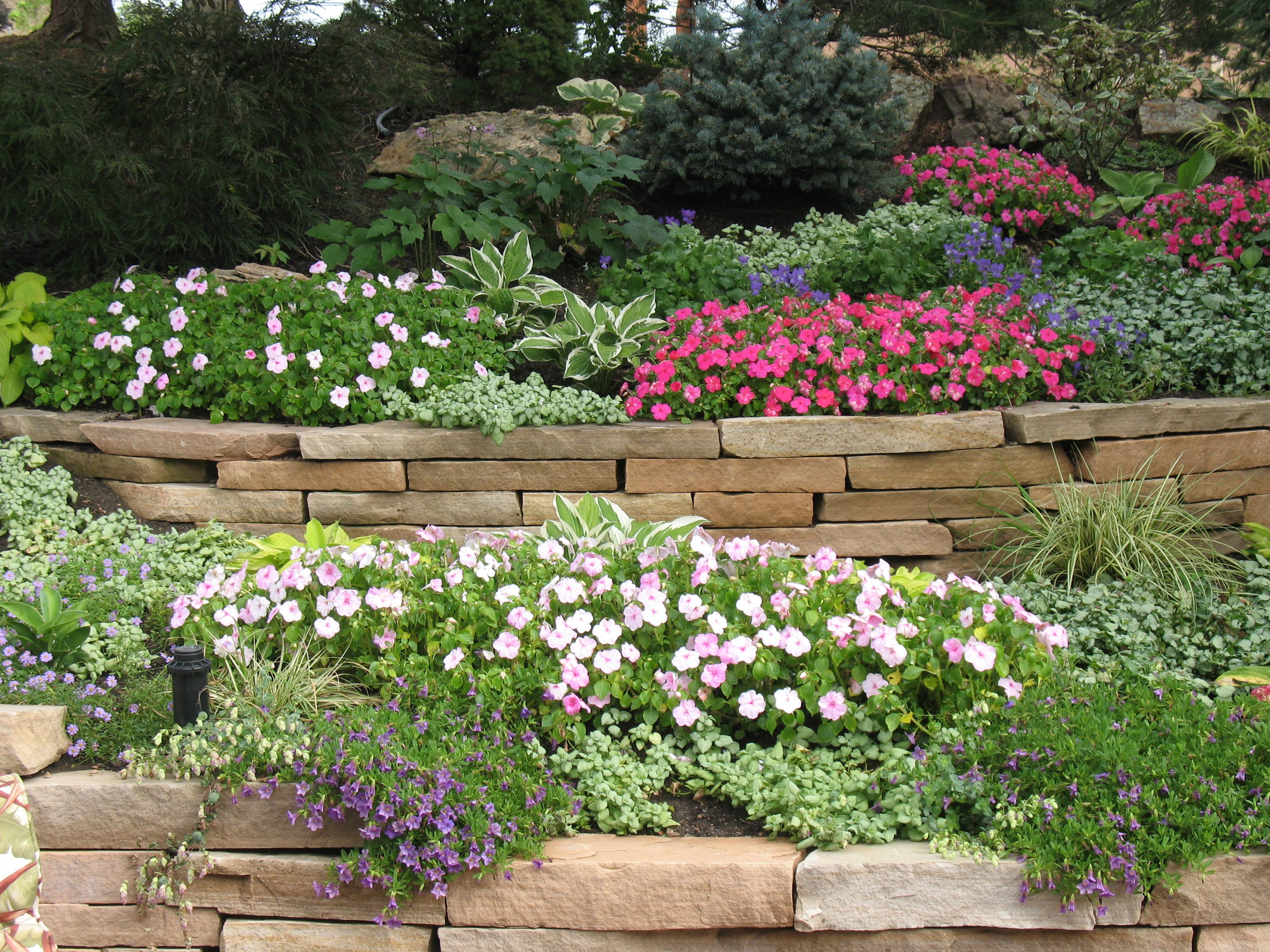 Colorado native plants landscape plant materials for for Flower landscape