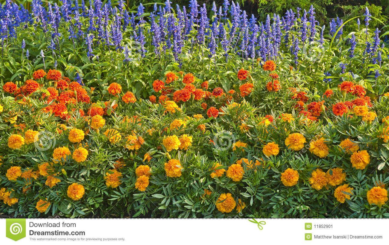 Annual bedding flowers recherche google plates bandes de fleurs annual bedding flowers recherche google izmirmasajfo Image collections