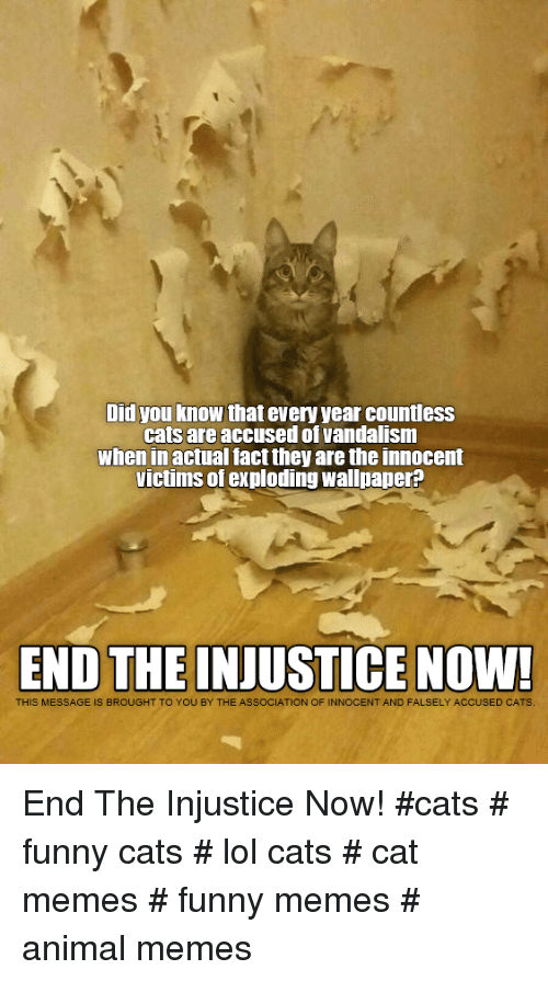 Cats Funny And Lol Did You Know That Every Year Countless Cats Are Accused Of Vandalism When In Actual Fact They Are Cat Memes Funny Cats Funny Cat Memes