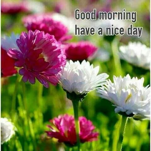 Good Morning Have A Nice Day Spring Flowers Pictures Pinterest