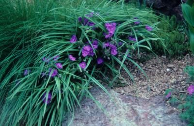 common perennials gardening with perennials university of illinois extension this is considered - Flower Garden Ideas Illinois