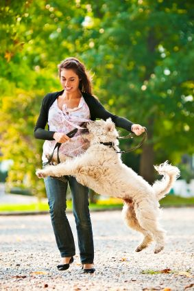 stop your puppy from jumping up  dog training jumping