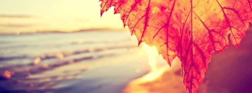 Autumn Leaf And The Beach Facebook Cover Fall Cover Photos Facebook Cover Photos Vintage Facebook Cover