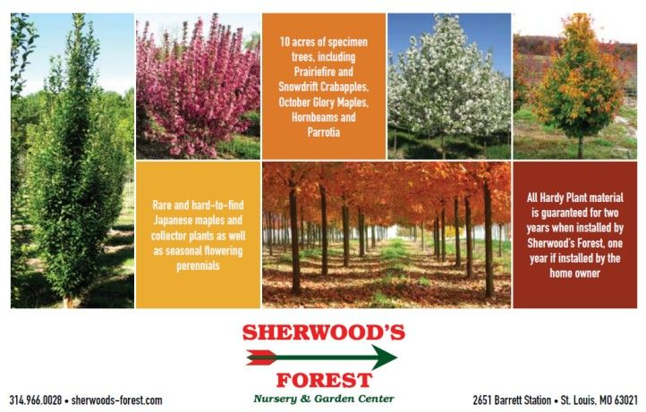 Sherwood S Forest Nursery