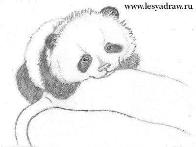 Как нарисовать панду карандашом поэтапно | Рисунок панды ...