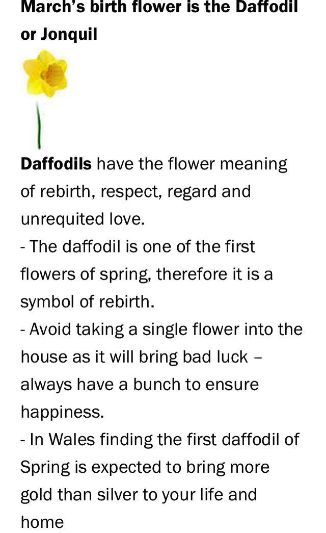 March Birthday Month Flower Daffodil Or Jonquil First Flowers Of Spring Birthday Month Flowers March Birth Flowers