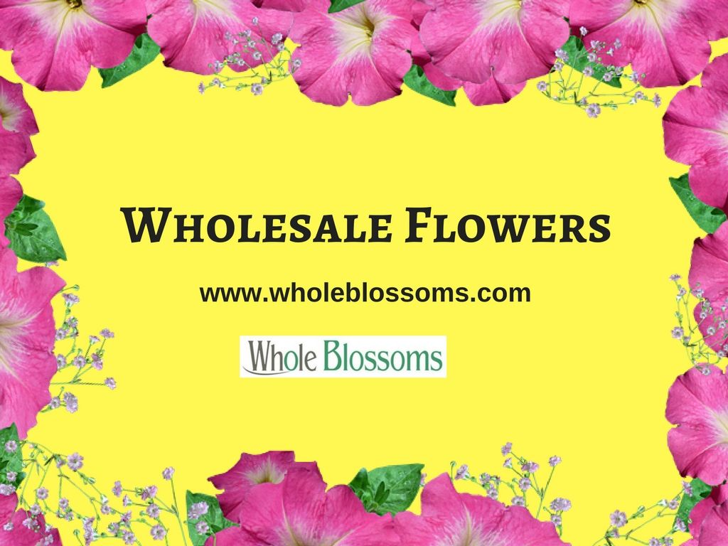 Whole blossoms is the best online shop where you can purchase whole blossoms is the best online shop where you can purchase wholesale flowers at the best izmirmasajfo