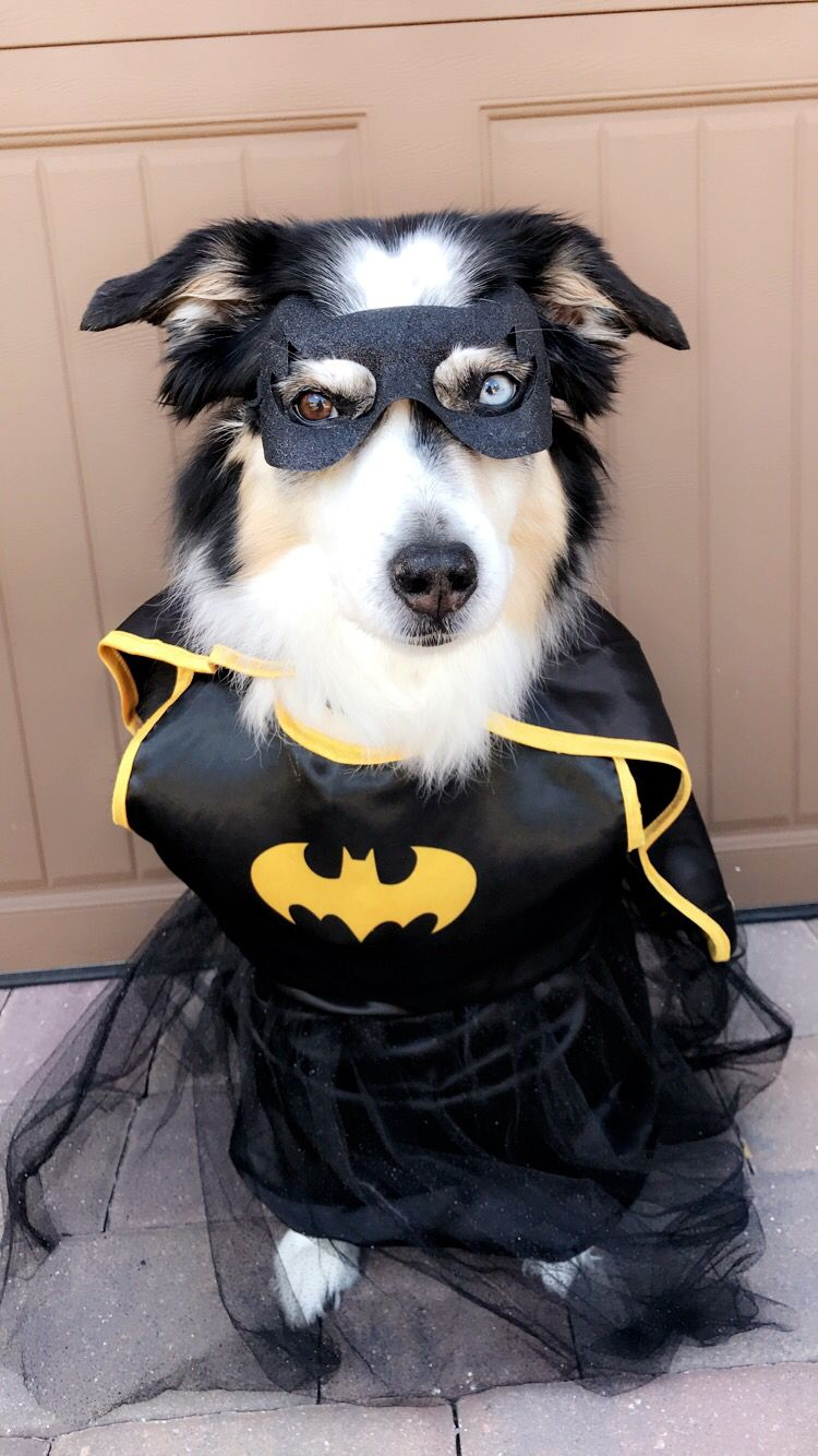 P U P S Image By Cassi Dog Halloween Dog Halloween