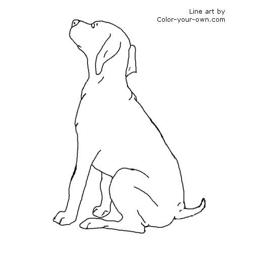 German Shorthaired Pointer Coloring Page