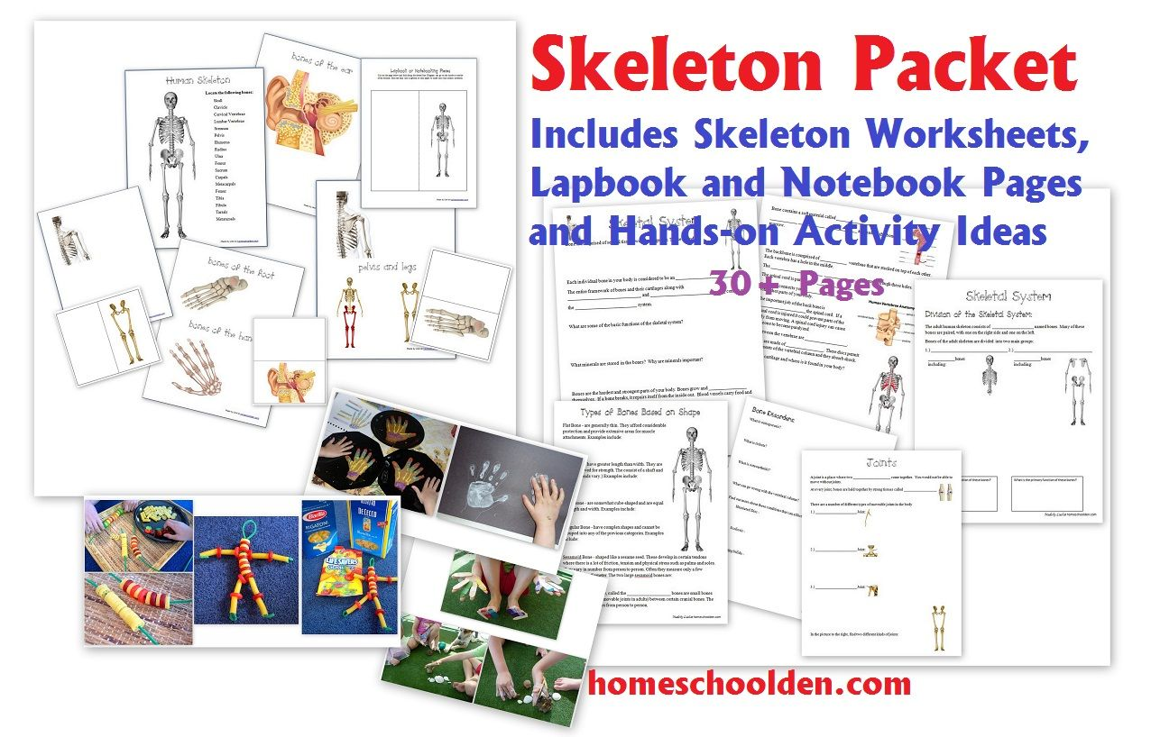 Skeletal System Worksheet Packet Amp 6 Hands On Activities