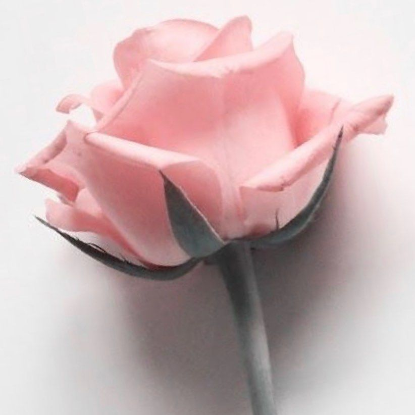 "Paz Vega on Instagram: ""Díselo con una rosa.. #buenosdias"""