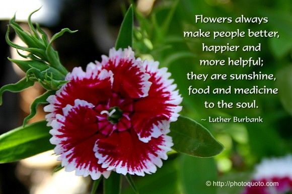 Flowers Always Make People Better Happier And More Helpful They Are Sunshine Food Luther Burbank Picture Quotes Flower Quotes Nature Quotes Flowers