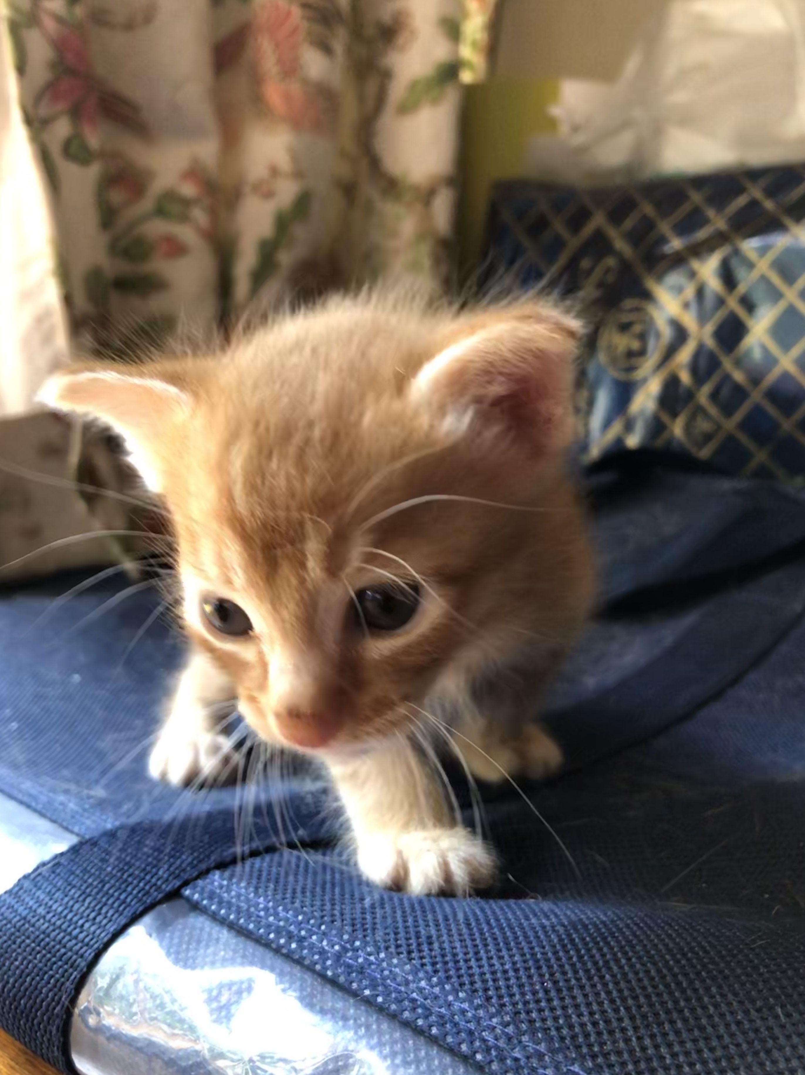 Boy 2 Born 21 Oct 2018 Orange Cats Cats And Kittens Kittens