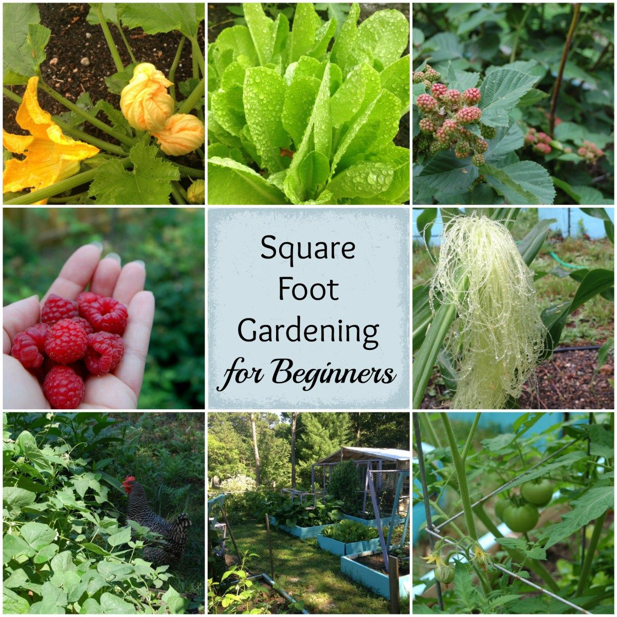 Beginners Guide To Square Foot Gardening Vegetable 400 x 300