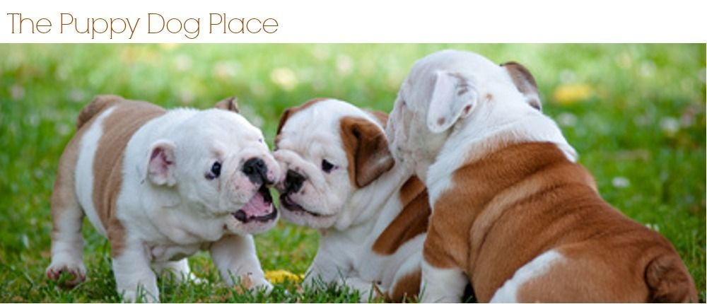 Puppy Crate Training Schedule English bulldog puppies