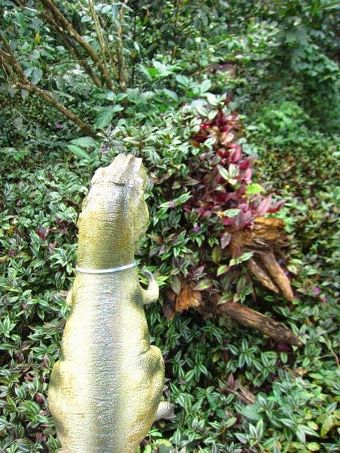 Coffee Break: #Dinosaur Adventures part I #kids #vacation #family #toys #photography #jungle