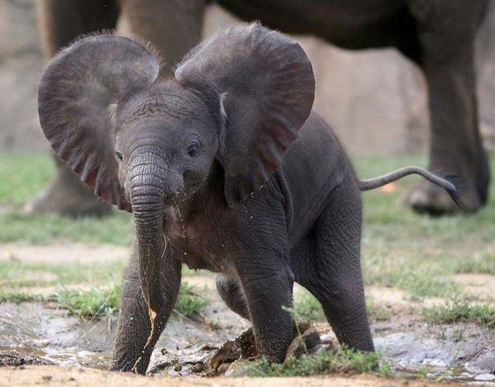 different types of elephants in the world in elephant elephants
