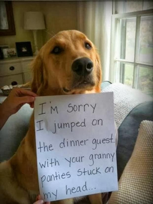 Dump A Day Attack Of The Funny Animals - 53 Pics