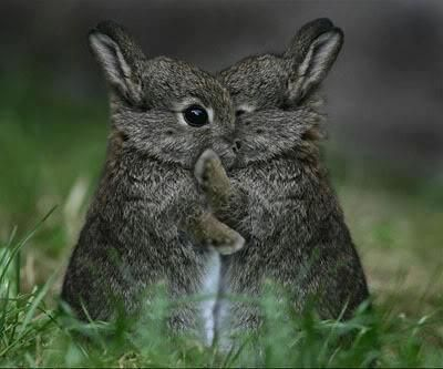 nothing cuter than bunnies hugging