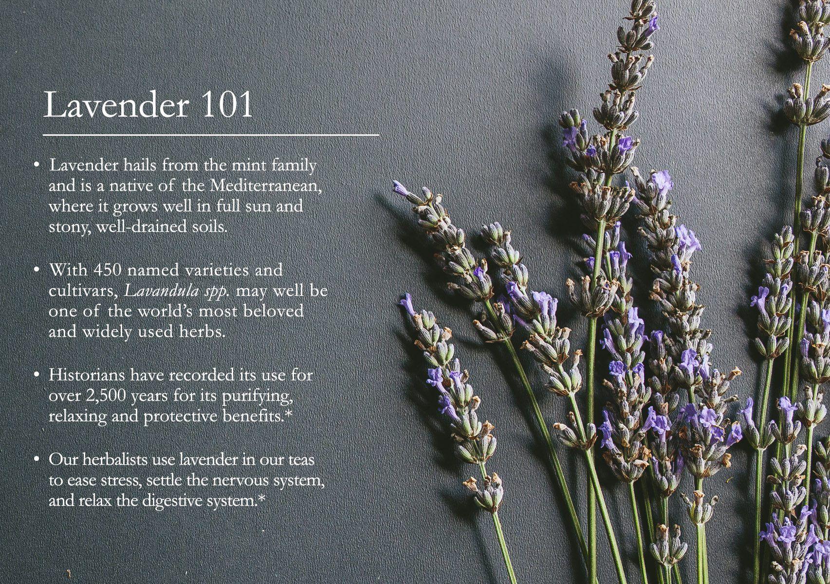 Lavender 101 In 2020 Herbalism Herbal Medicine Herbal Bath