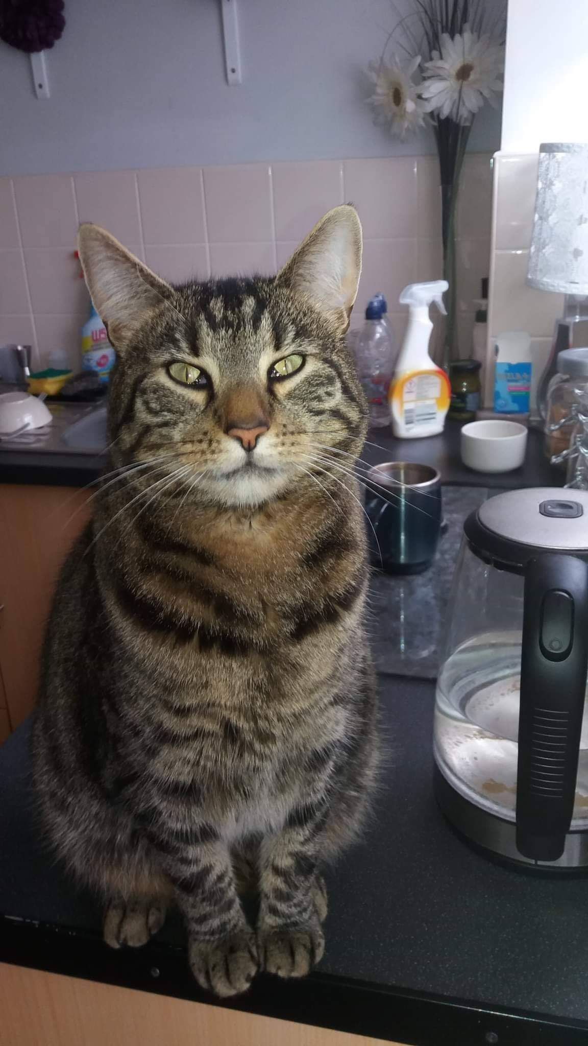Save Our Scouse Cats on Cats, Cat s, Animal rescue
