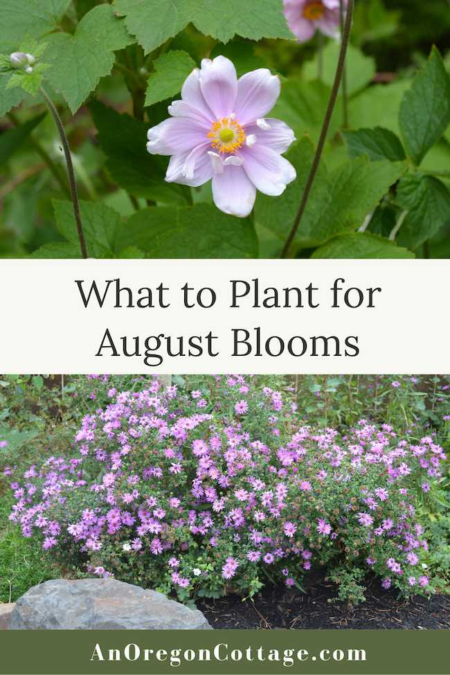 What To Plant For August Blooms An Oregon Cottage In 2020 Plants Easy Garden Gardening For Beginners
