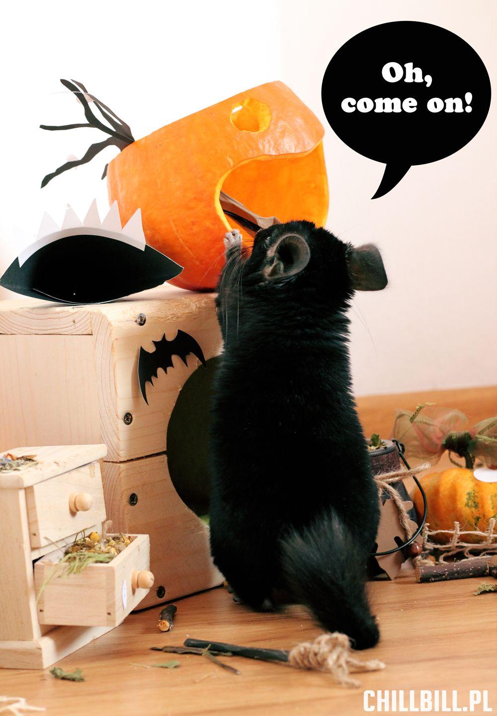 Mały Billy przygotowuje się na Halloween! ) (With images