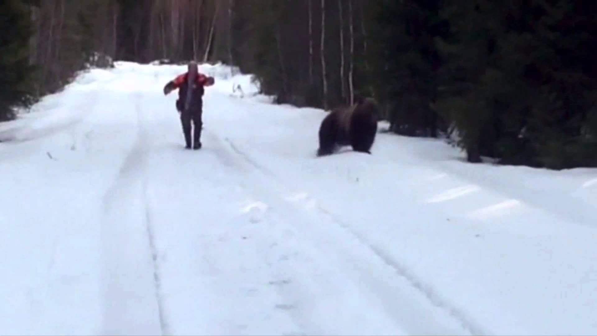 Swedish Man Scares Off An Attacking Bear Animals Swedish Men Bear Attack Bear