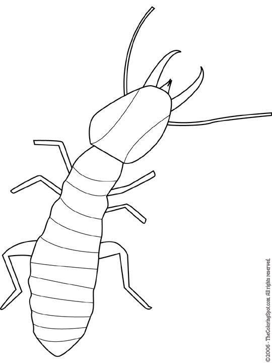 Termite Jpg 540 720 Pixels Bug Art Outline Drawings Termites
