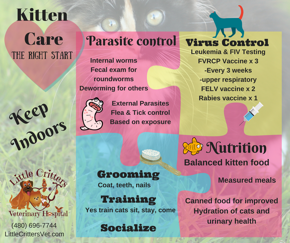 Cat Kitten Care At Little Critters Vet Kitten Care Small Animal Clinic Pet Clinic