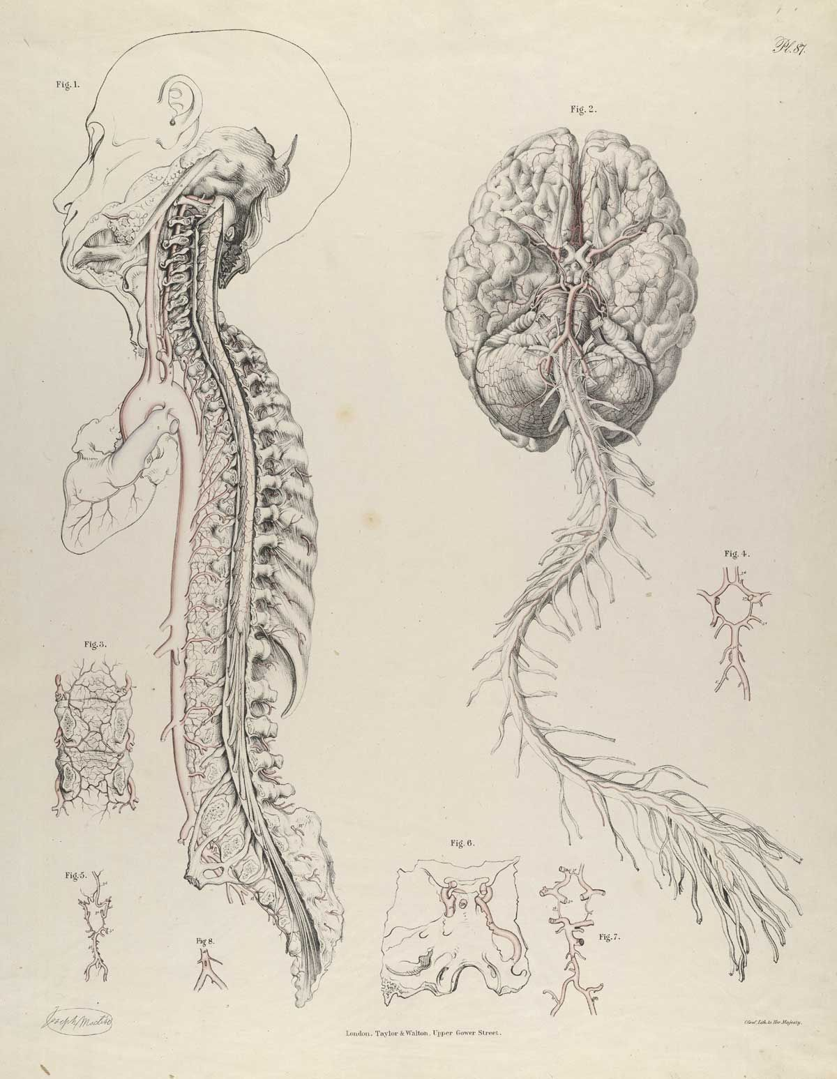 By richard quain from the anatomy of the arteries of the human by richard quain from the anatomy of the arteries of the human body with its applications to pathology and operative surgery 1844 ccuart Images