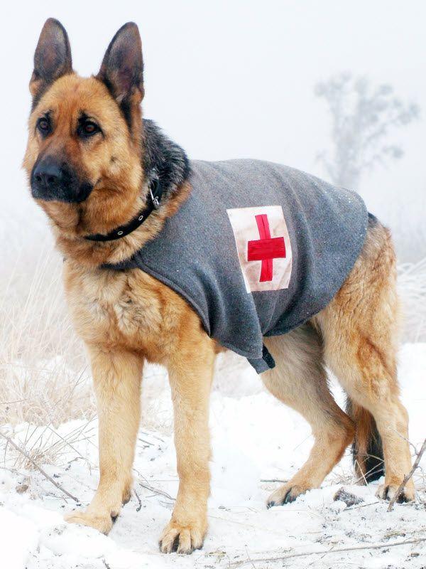 Rin Tin Tin Dog Pictures