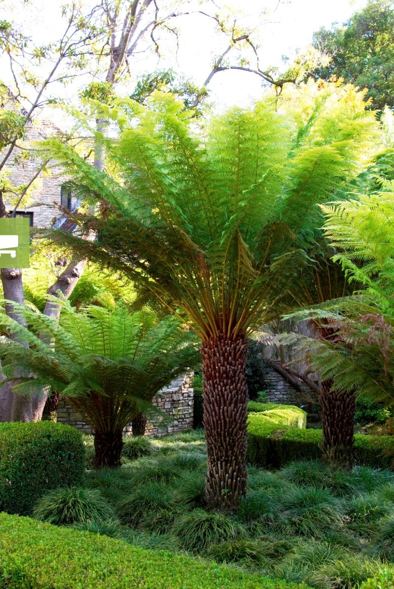 21 Best Ferns for Your Garden is part of Tree fern, Plants, Ferns garden, Woodland garden, Shade garden, Landscape design - Best ferns for a yard with deep shade or water retention  A yard with deep shade that prevents grass from growing  bald spots in your lawn under trees