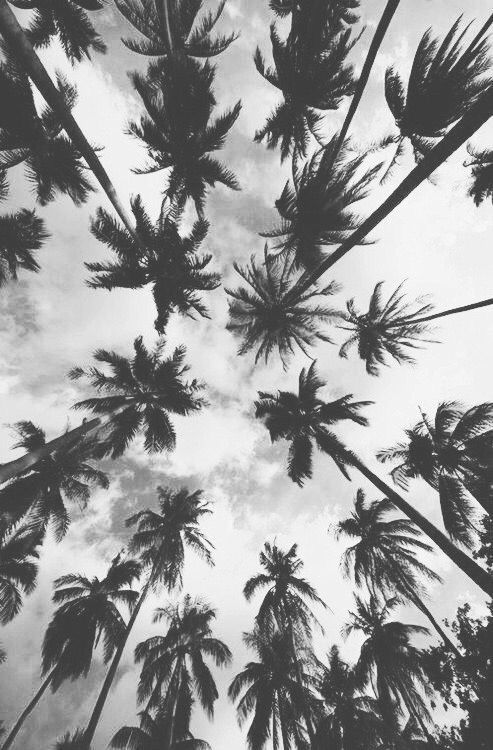 Resultado De Imagen Para Tumblr Iphone Wallpapers Black And White