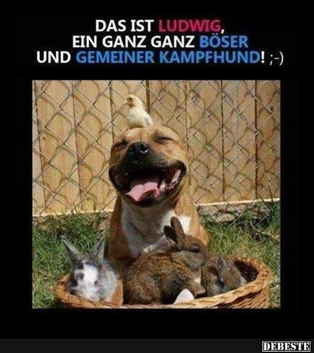 Das Ist Ludwig Gluckliche Tiere Gluckliche Hunde Witzige Tiere