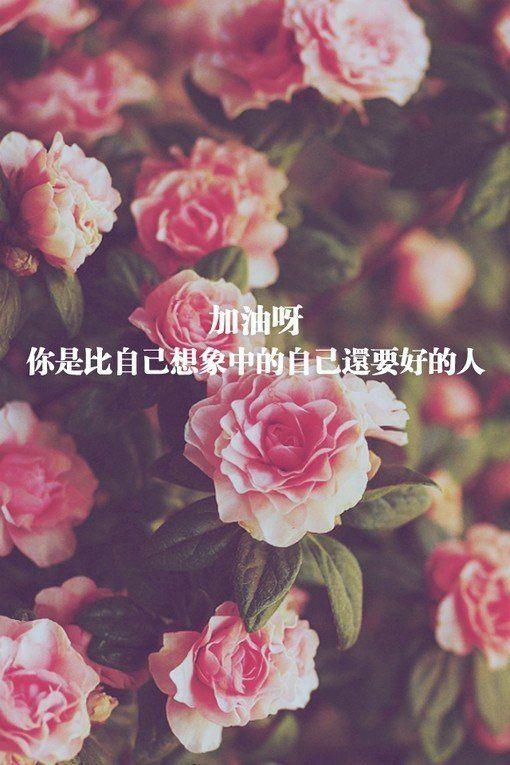 Chinese Quotes Tumblr Flowers Photography Trendy Flowers Flowers