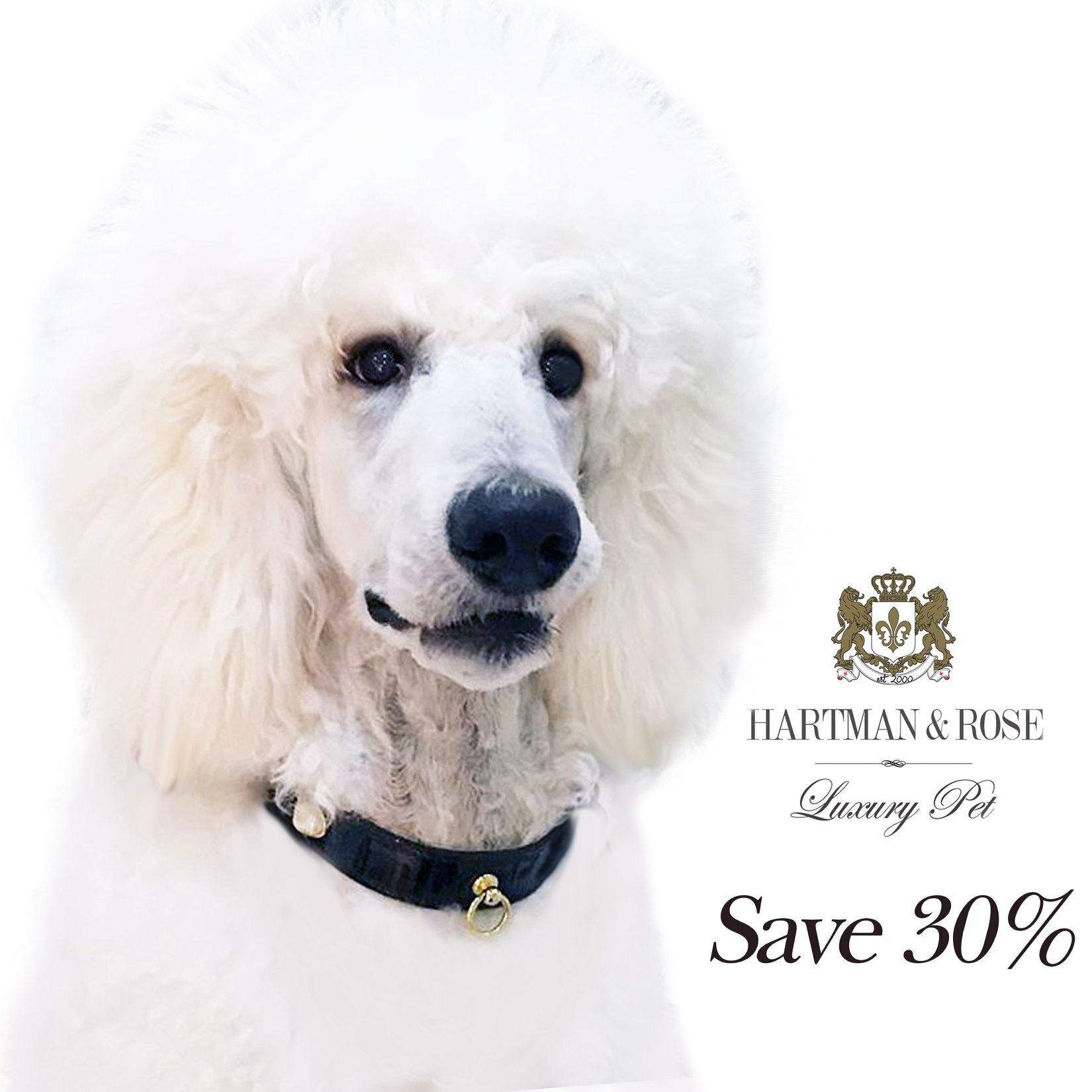 SAVE 30% online use code: HOLIDAYSAVINGS www.hartmanandrose.com Duke is wearing the South Seas collar in black patent. This Aussie is beyond words. He is magnificent. @hartmanandrose @duke_thepoodle Take the Lead & Walk in Style  Love Your Dog. Spread the Love ❤️