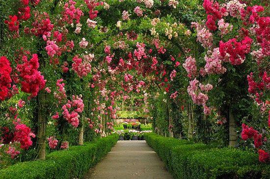 Pin On Ogrody Gardens