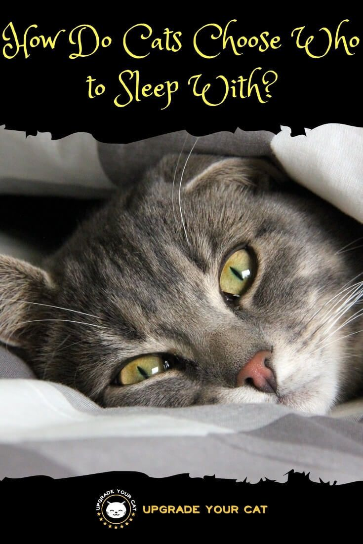 How do cats choose who to sleep with cat behavior cat