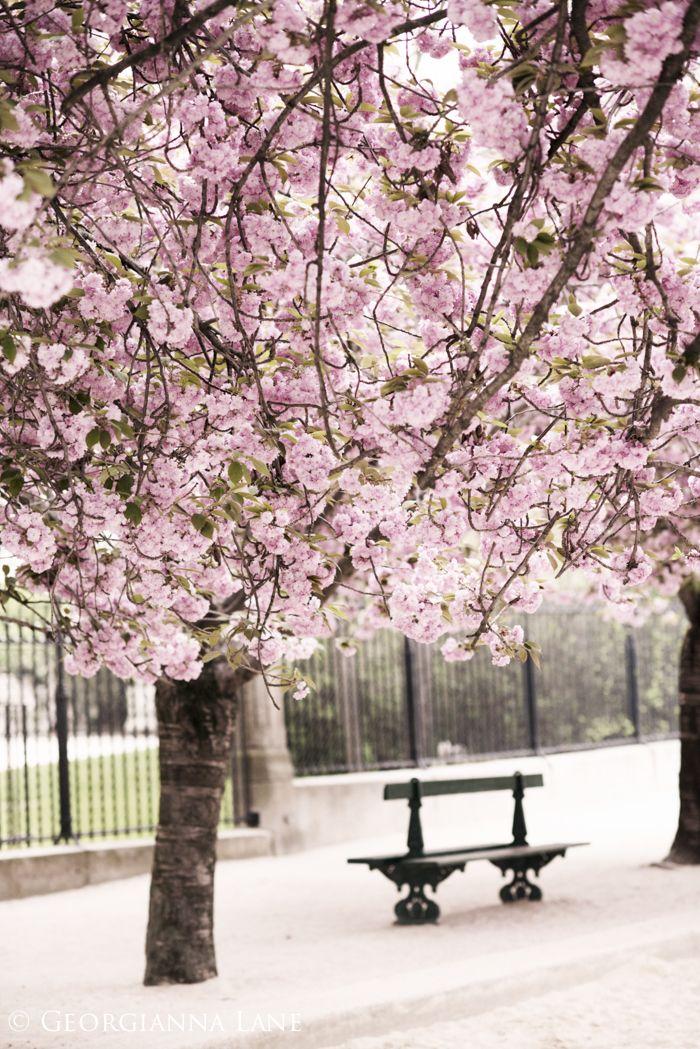 Movie 442 cherry blossom lane