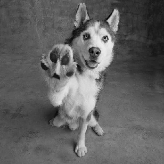 photopic: Give me Five nice dog