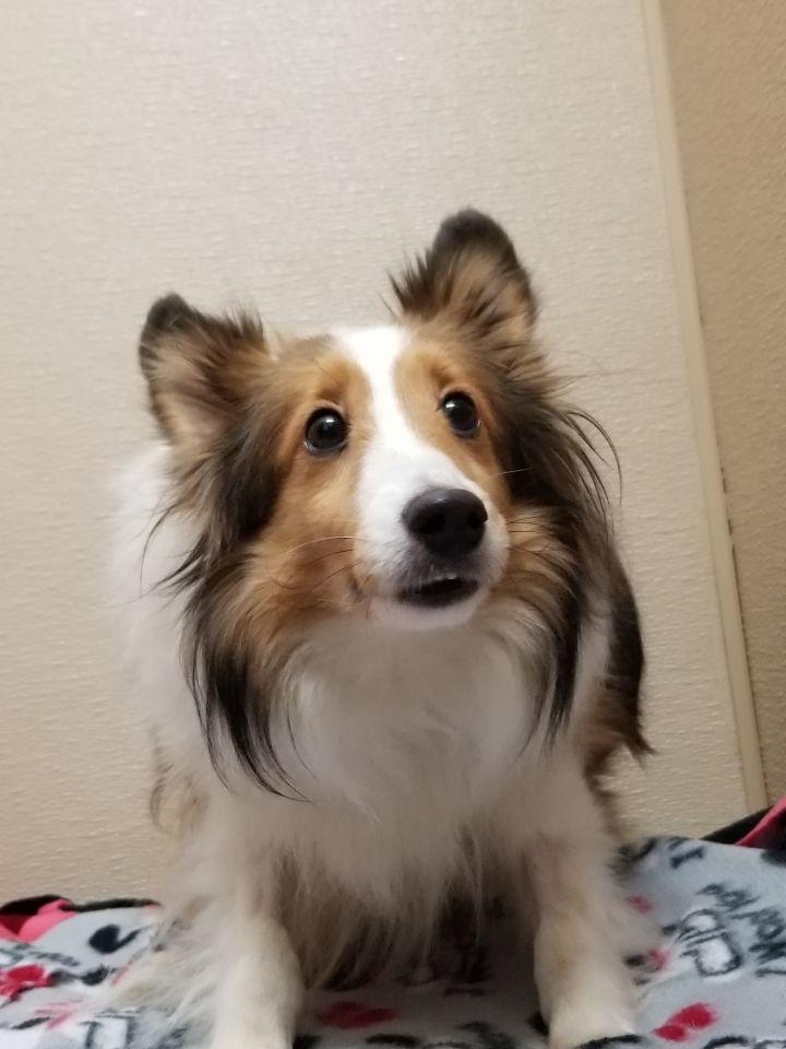 Adopt Callie On In 2020 Dog Adoption