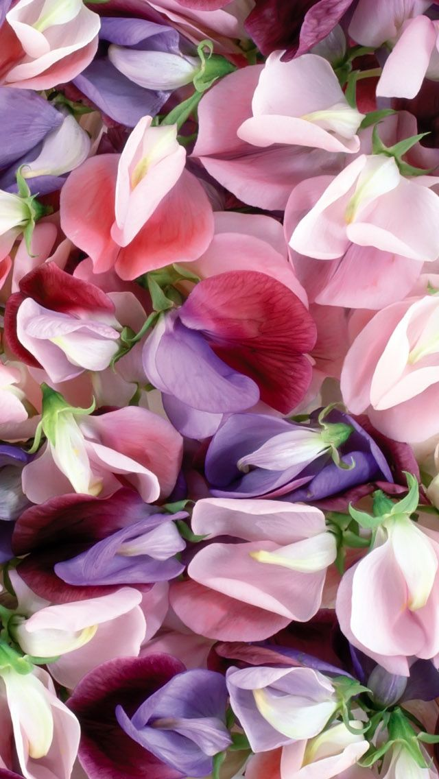 Purple And Pink Flowers iPhone 5s Wallpaper Various