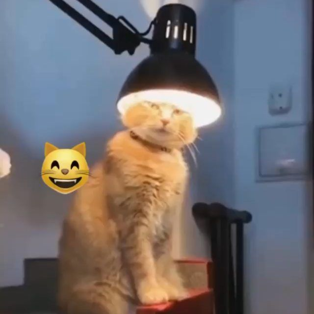 Tebak lagi ngapain mpusnya Tebak lagi ngapain mpusnya      Repost catloverswelcome Jangan lupa like dan Follow  untuk dapat update kucingkucing lucu   Dan juga TagShare...