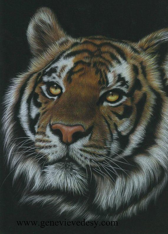 Reproduction D Un Dessin De Tigre Aux Crayons De Par Matantege