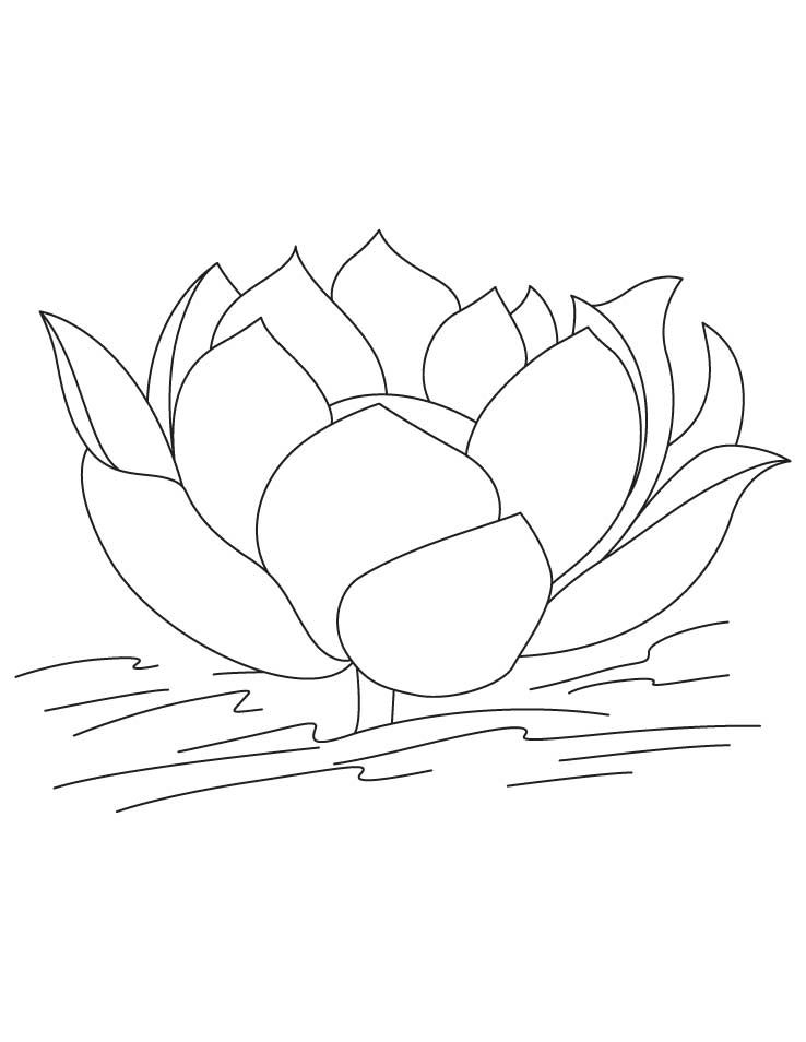 Lotus Flower In Water Coloring Pages
