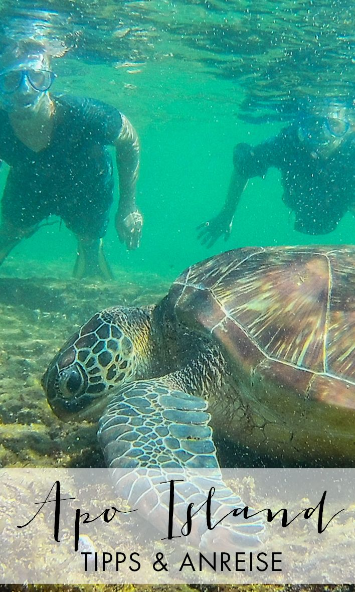Tipps, Übernachtung und Anfahrt für Apo Island: eine Insel auf den Philippinen, vor deren Küste du mit Schildkröten schnorcheln kannst.