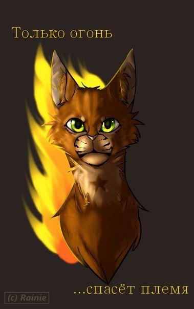 """Огнезвёзд (Кот из книги КВ).  В книге """"Стань Диким!"""" Пестролистой приходит пророчество """"Только огонь спасёт племя"""""""