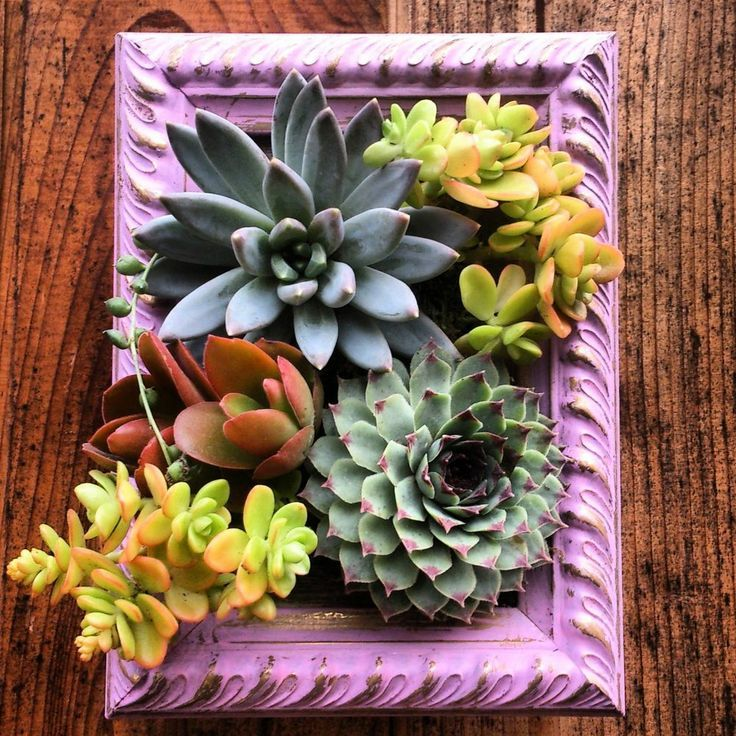 12 Ideas For Quirky Plant Containers To Jazz Up Your Garden: Succulent Vertical Garden Frame