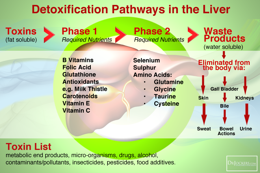 Cbs Mutation And Low Sulfur Diet Drjockers Com Liver Health Foods For Liver Health Liver Detoxification